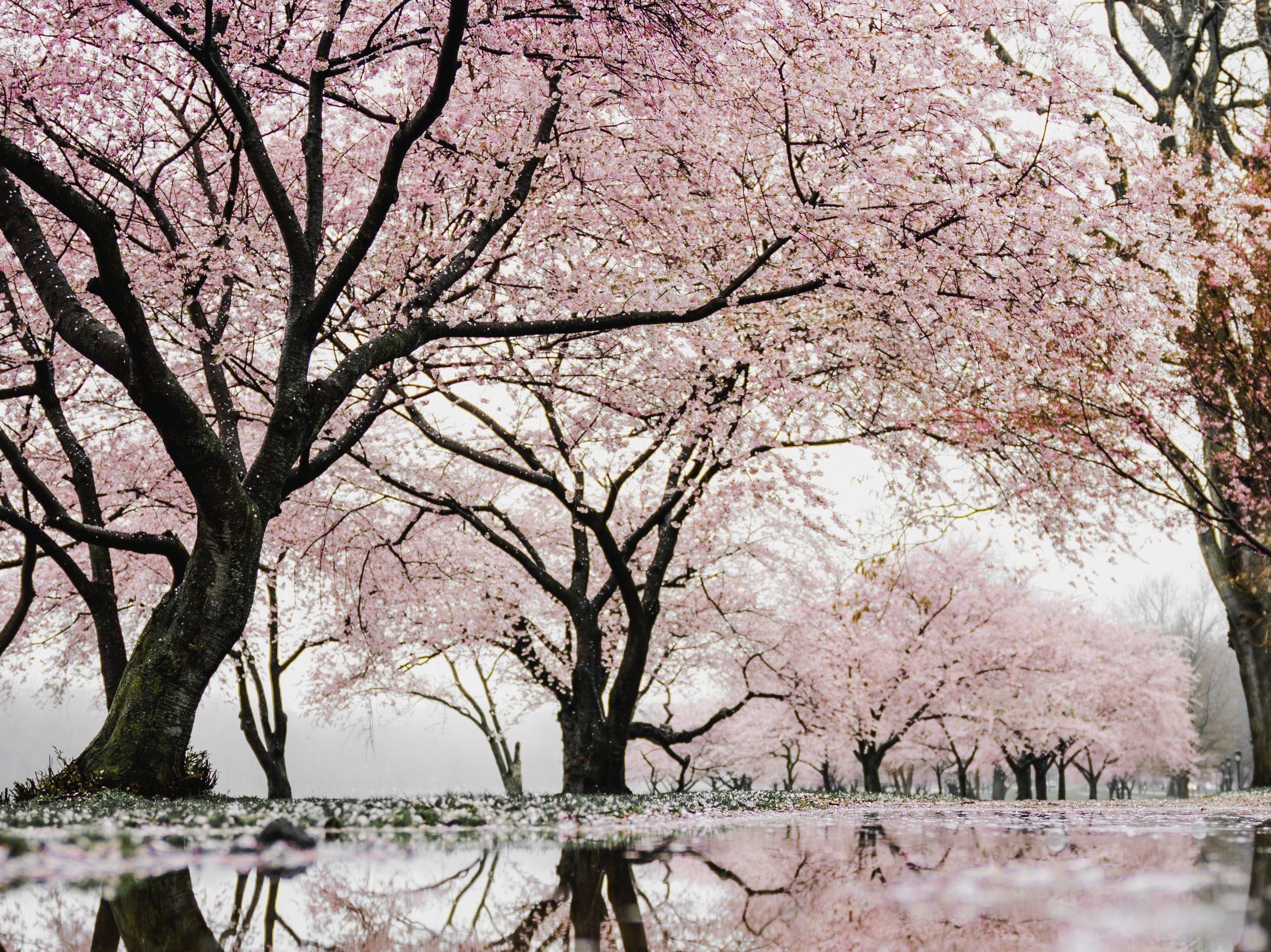 Second Spring Wonderland